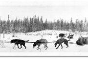 Inuici - kultura i ich psy
