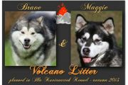 Zapowiedź miotu Brave & Maggie