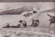 Alaskan Malamute naszym okiem