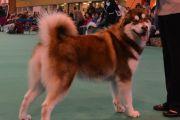 Swindon & District Canine Society - 02.03.2013