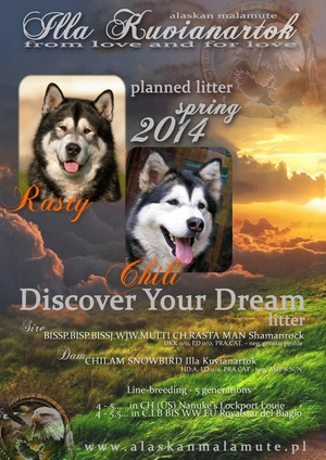 announce alaskanmalamute discovery litter300