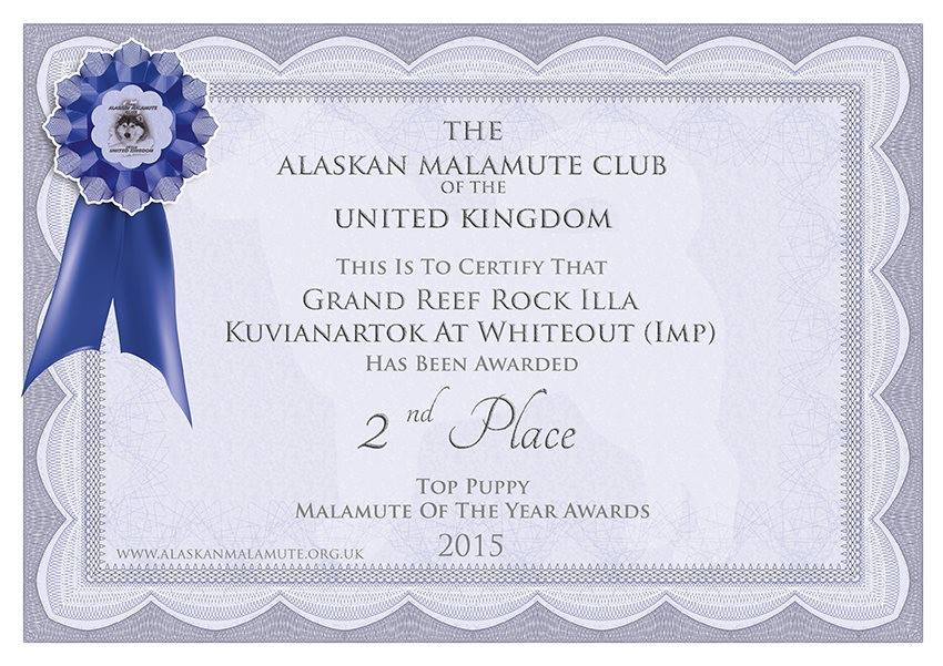 Top Puppy 2015 alaskan malamute on UK
